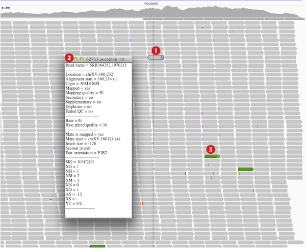 Viewing alignments integrative genomics viewer the hover element details 2 are also displayed either for a single read in normal view left or for a pair of reads in paired reads view right sciox Images