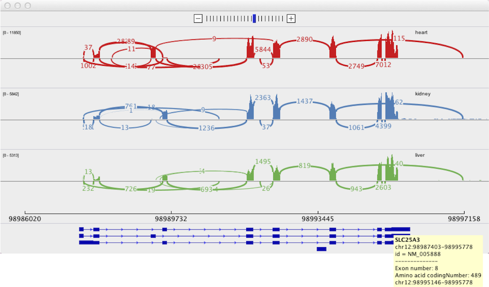 Sashimi Plot | Integrative Genomics Viewer