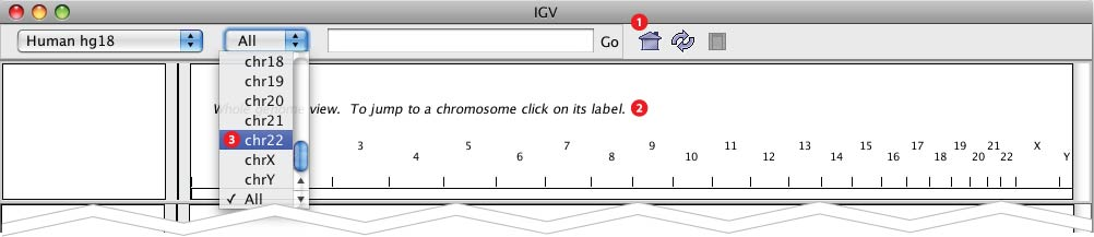 Click The Whole Genome View Icon To Zoom Out